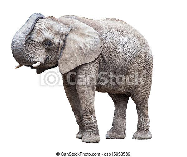 elephant isolated. - csp15953589