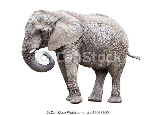 elephant isolated. - csp15953590