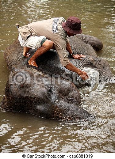 Elephant keeper - csp0881019