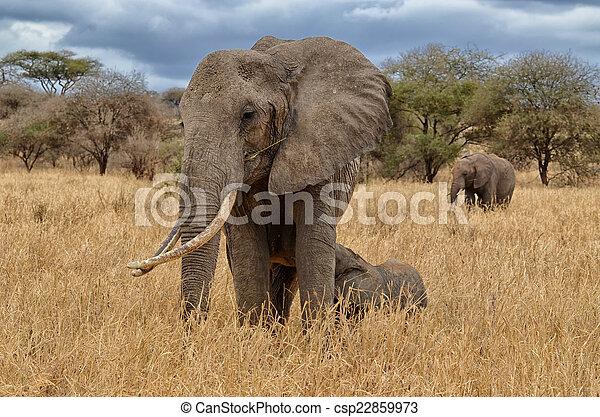 Elephant Nursing - csp22859973