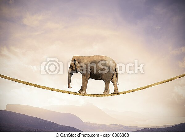 Elephant on a rope - csp16006368