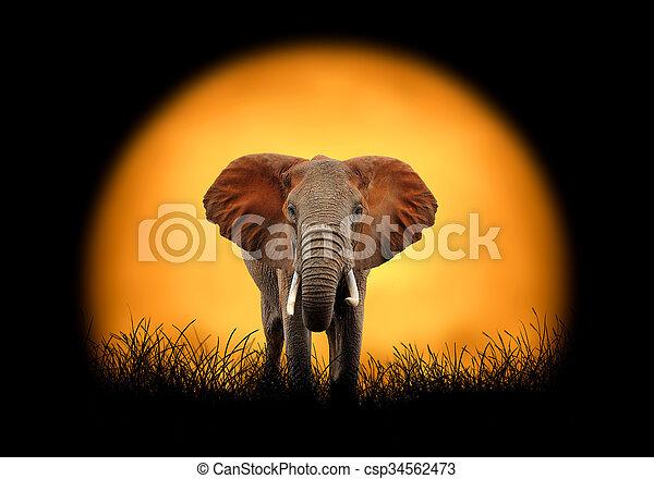 Elephant on the background of sunset - csp34562473