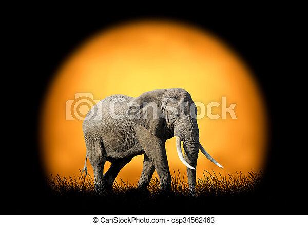 Elephant on the background of sunset - csp34562463