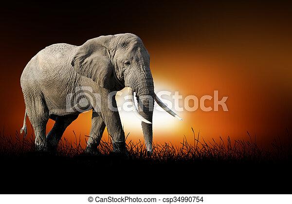 Elephant on the background of sunset - csp34990754