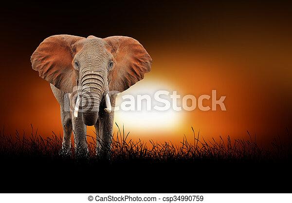 Elephant on the background of sunset - csp34990759