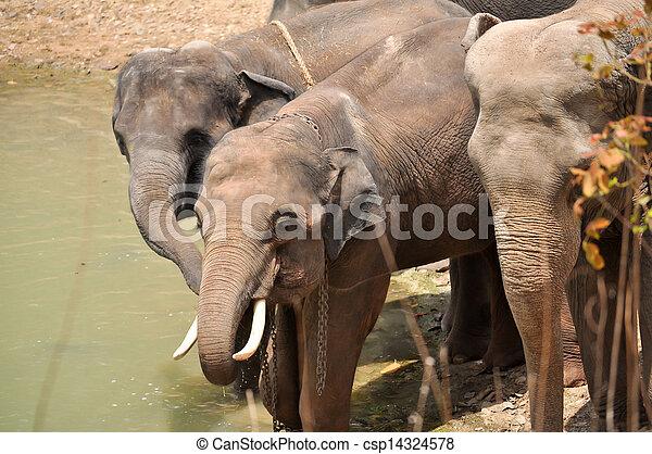 Elephant - csp14324578
