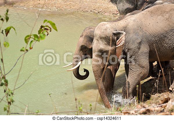 Elephant - csp14324611