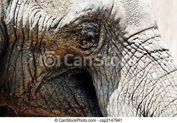 elephant - csp2147941