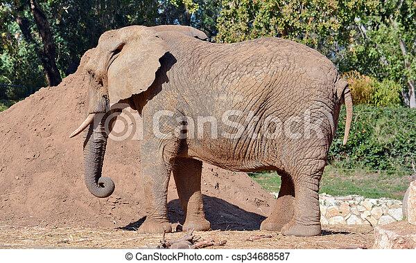 elephant - csp34688587