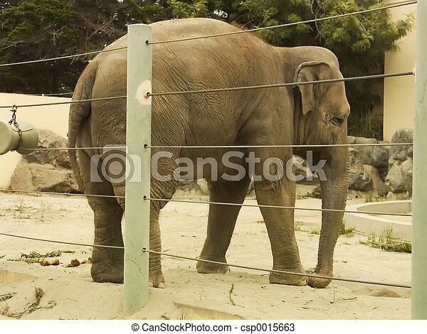 Elephant Rear - csp0015663