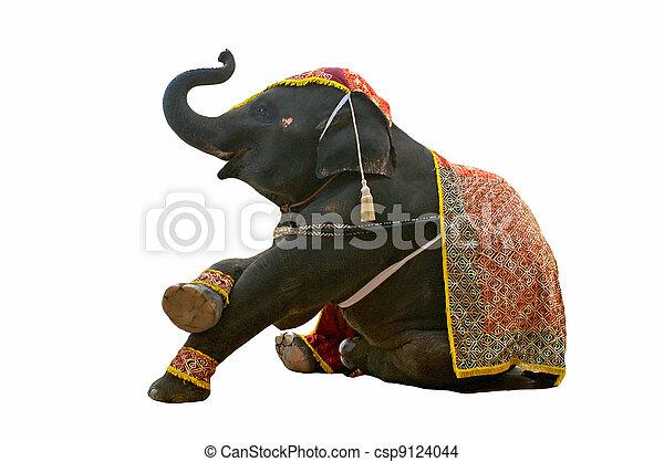 elephant show in chiang mai night safari - csp9124044