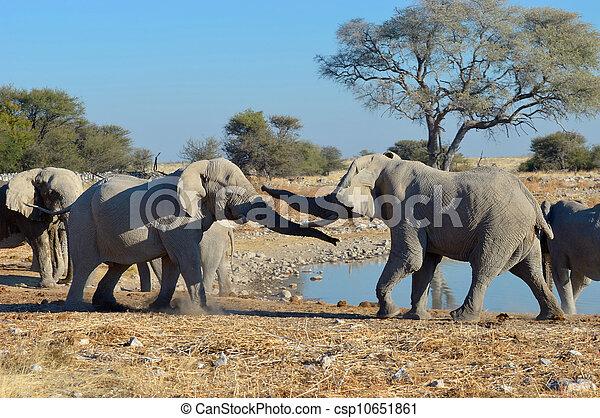 Elephant squabble, Etosha National Park, Namibia - csp10651861