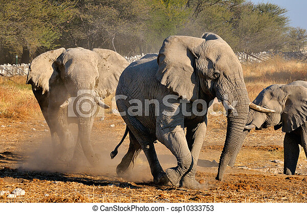 Elephant squabble, Etosha National park, Namibia - csp10333753