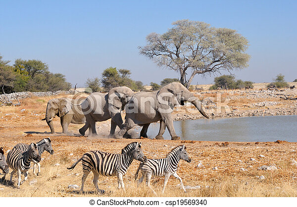 Elephant squabble, Etosha National park, Namibia - csp19569340