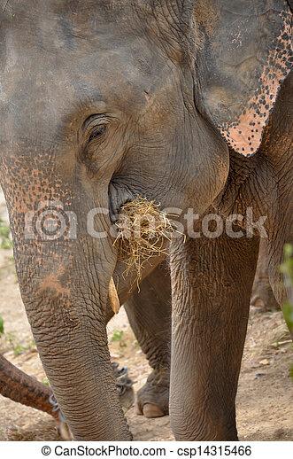 Elephant - csp14315466