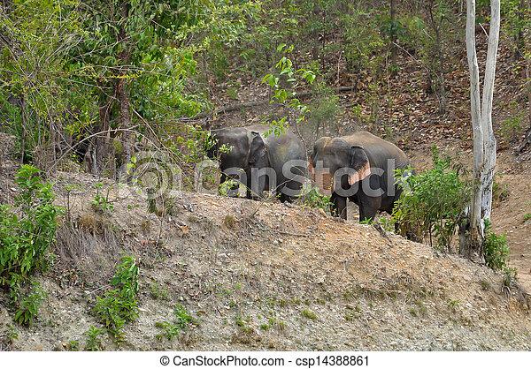 Elephant - csp14388861