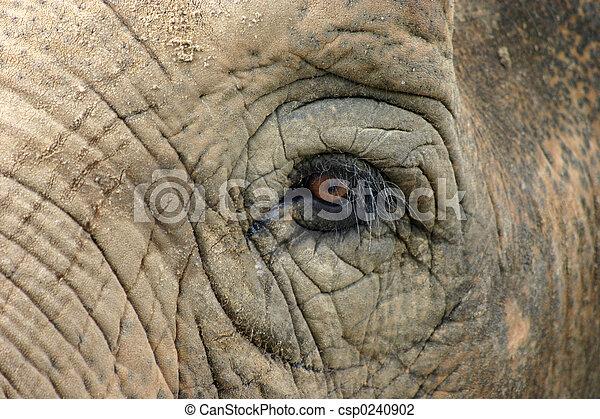 Elephant - csp0240902