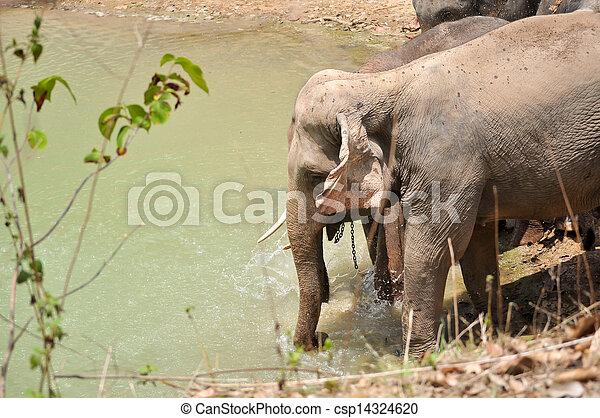 Elephant - csp14324620