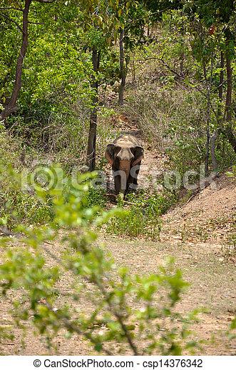 Elephant - csp14376342