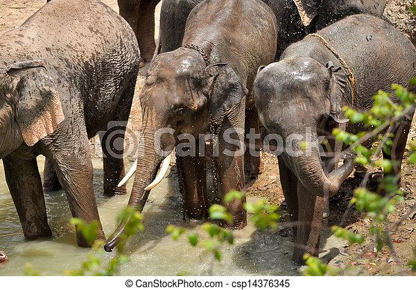 Elephant - csp14376345