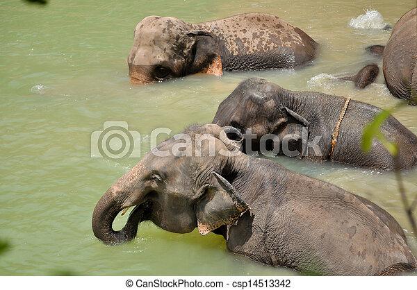 Elephant - csp14513342