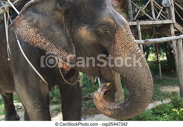Elephant - csp25447342