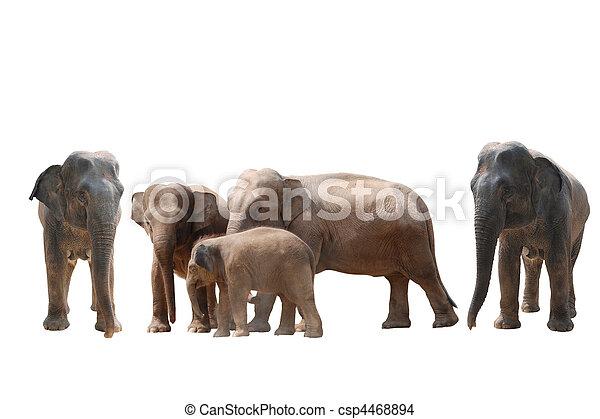 elephant - csp4468894