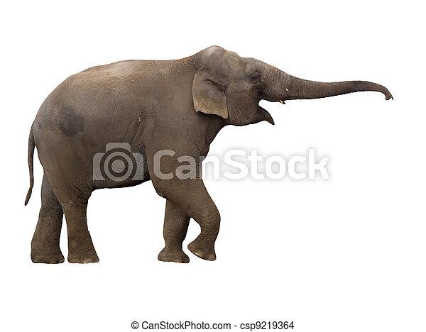 Elephant - csp9219364