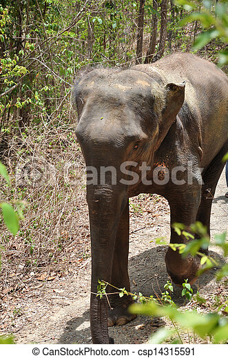 Elephant - csp14315591
