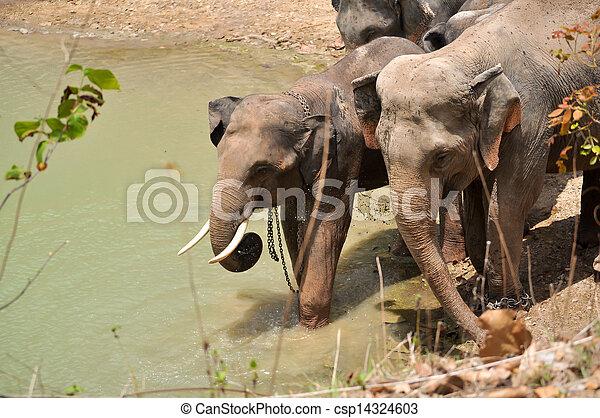 Elephant - csp14324603