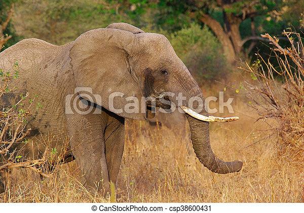 Elephant - csp38600431
