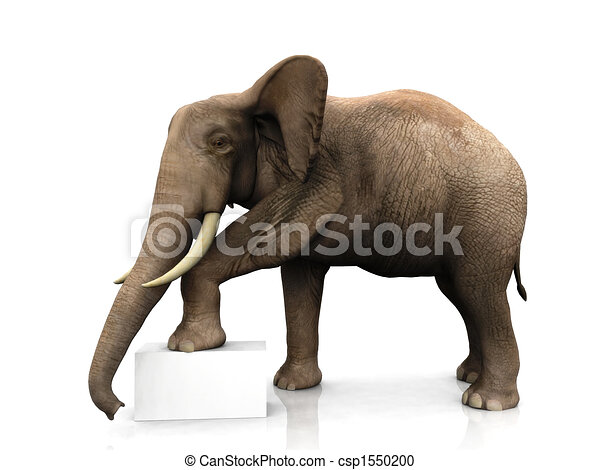 Elephant with sign - csp1550200