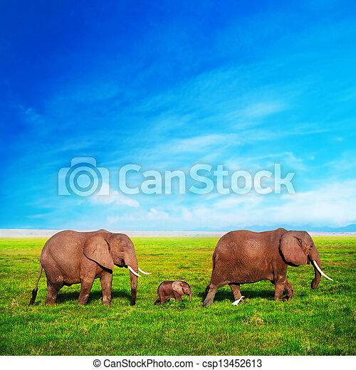 Elephants family on savanna. Safari in Amboseli, Kenya, Africa - csp13452613