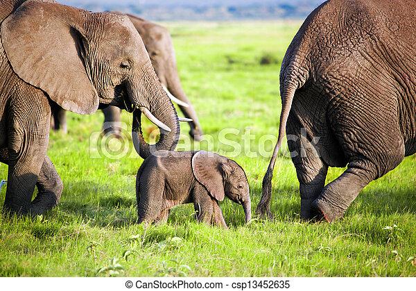 Elephants family on savanna. Safari in Amboseli, Kenya, Africa - csp13452635