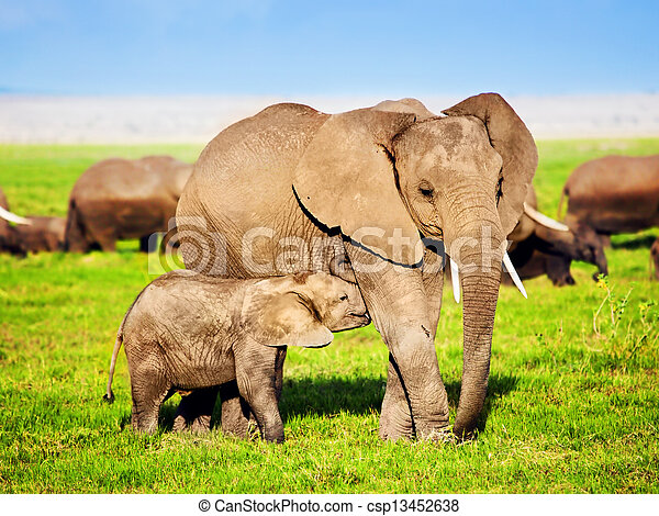 Elephants family on savanna. Safari in Amboseli, Kenya, Africa - csp13452638