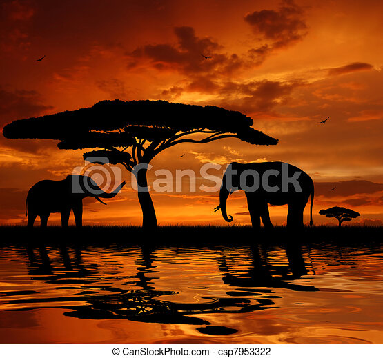 elephants in the sunset  - csp7953322