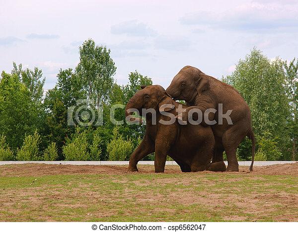 Elephants - csp6562047