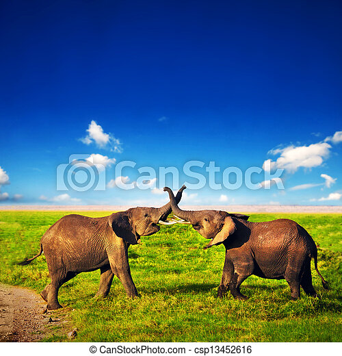 Elephants playing on savanna. Safari in Amboseli, Kenya, Africa - csp13452616