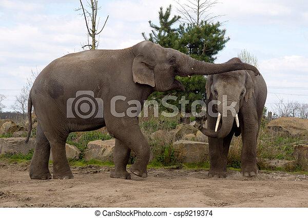 Elephants - csp9219374