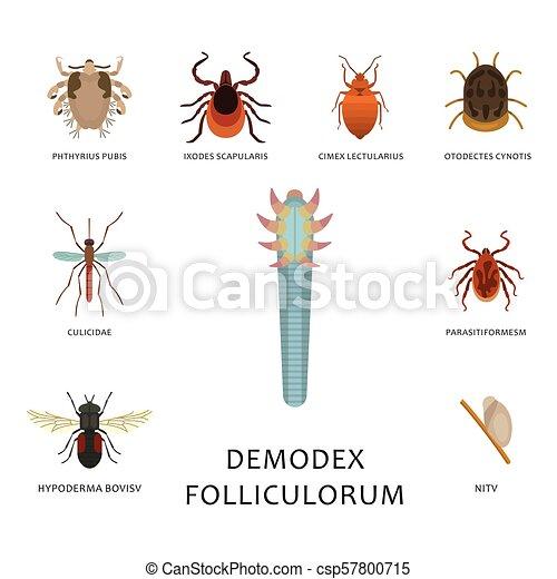 emberi és állati paraziták betegség vektorok)