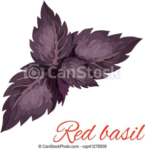 emblema, erva, folhas, isolado, manjericão, vermelho - csp41278509