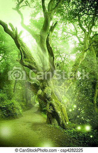 encantado, bosque - csp4282225