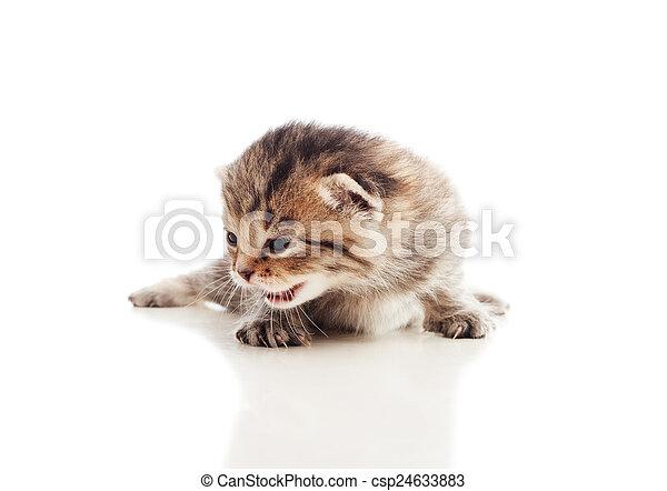 Un precioso gatito tabby en un fondo blanco - csp24633883