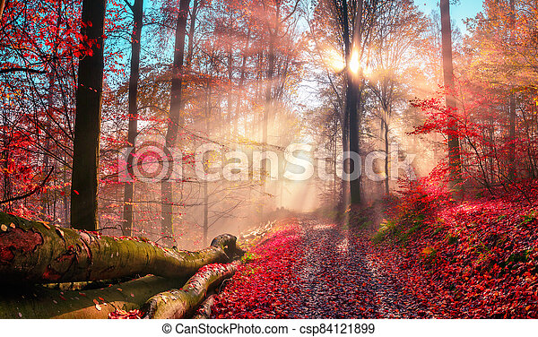 Enchanting autumn scenery in dreamy colors - csp84121899