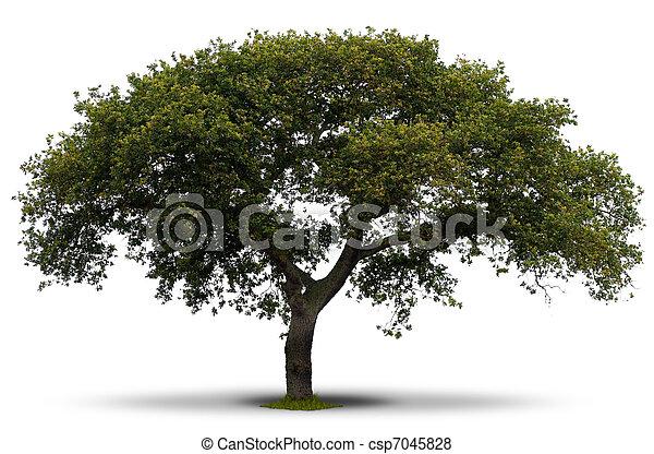 Encima rbol fondo verde sombra pasto o c sped ra z for Arboles para sombra de poca raiz