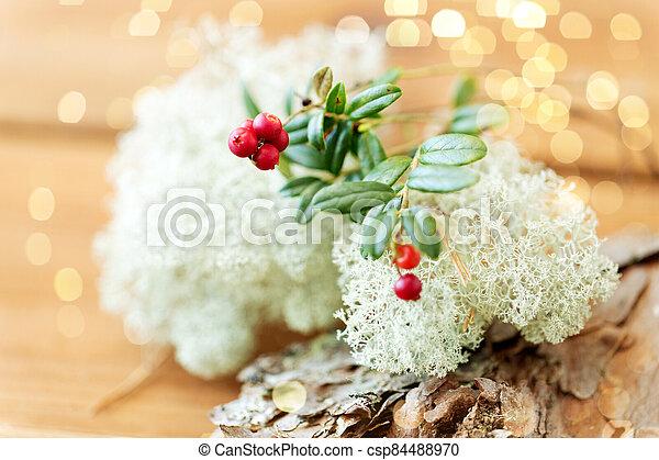 encima de cierre, musgo, liquen, cowberry, reno - csp84488970