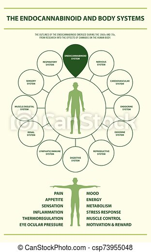 Endocannabinoid and Body Systems vertical infographic - csp73955048