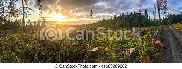 endommagé, -, arbres, cassé, forêt, orage, pendant, vent - csp63289202