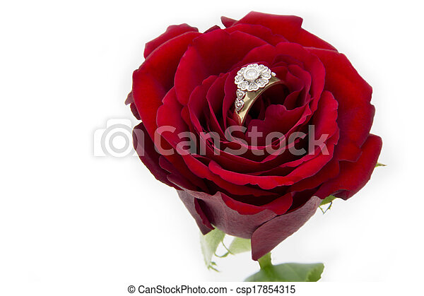 Engagement Ring in a Rose - csp17854315