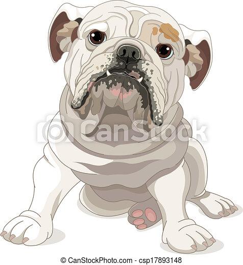 English Bulldog - csp17893148